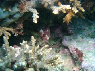 植えつけた珊瑚に吸収されるネームタグ